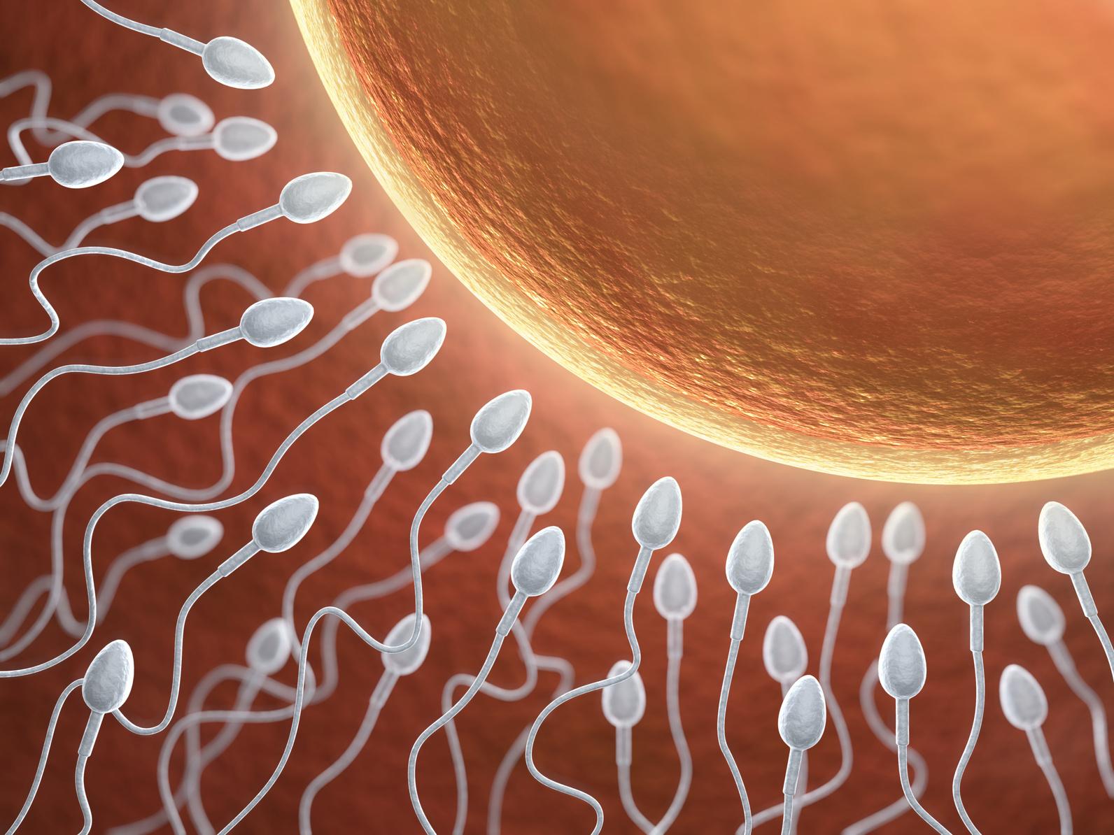 povishenie-kachestva-spermi